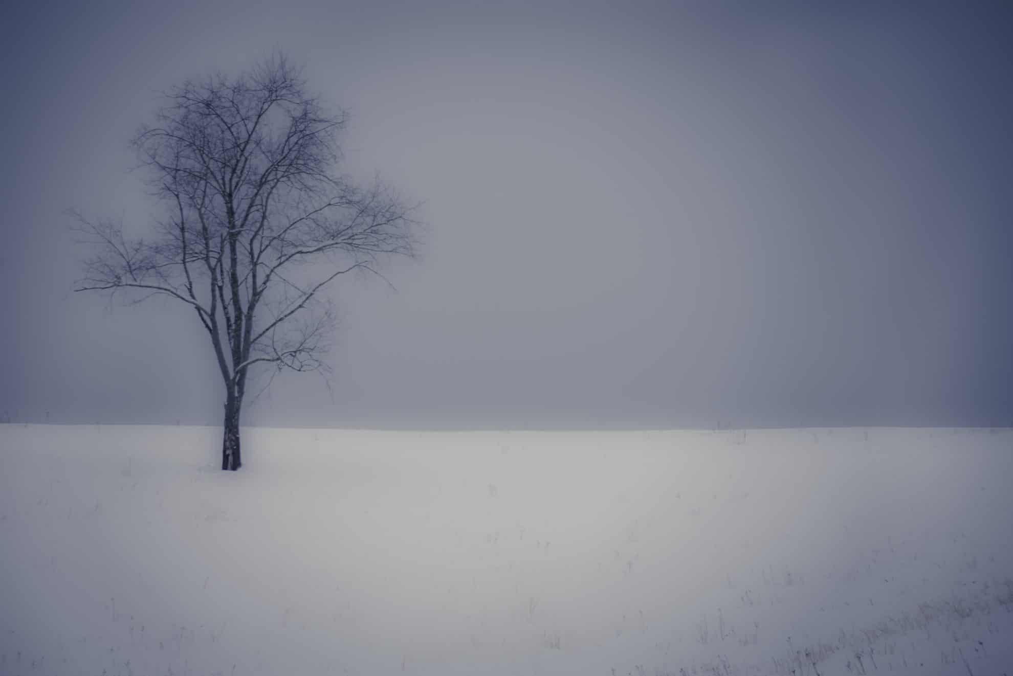 snowy landscape print of lone bare tree in field of snow