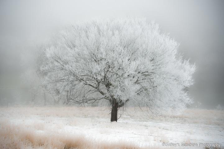 winter scene art photo of cotton-like fluffy snow on a lone tree