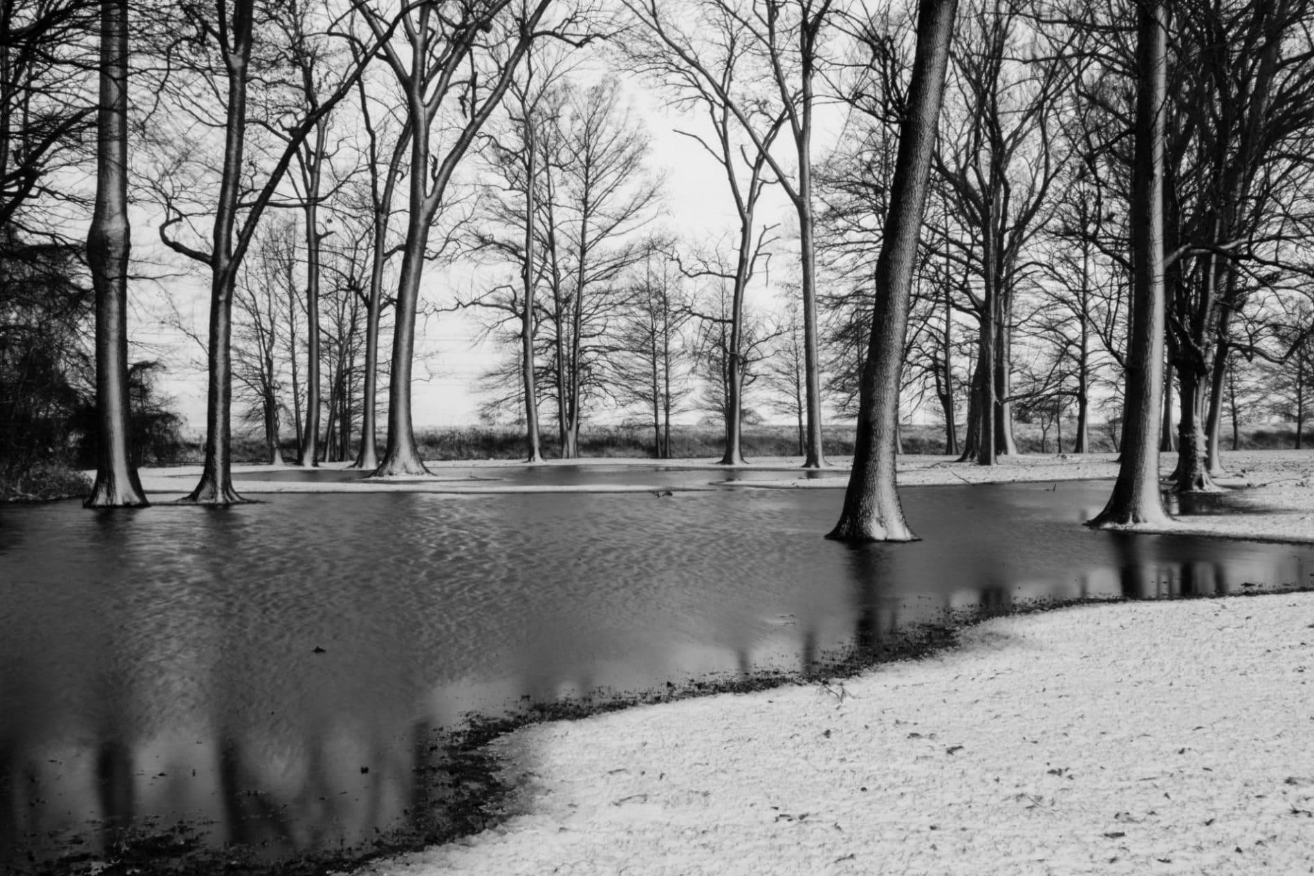 bald cypress trees in water in a snowy landscape