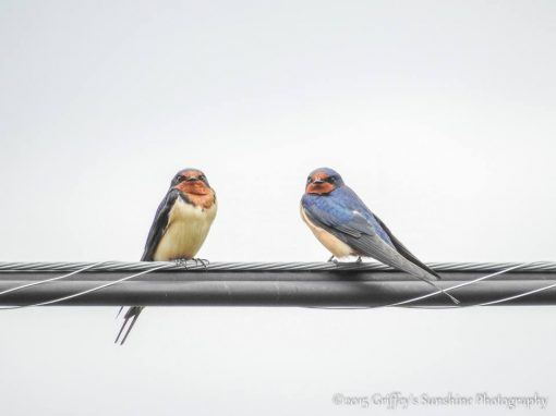 birds on a wire picture small talk