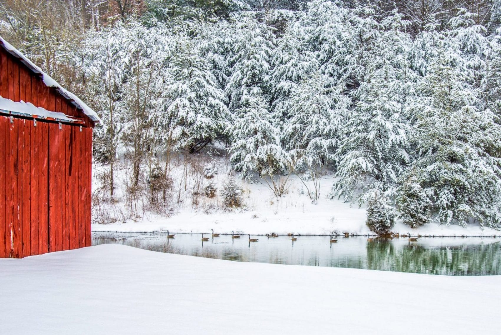 winter canvas print with snowy trees red barn and geese on pond