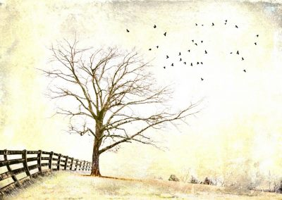 artistically edited tree and birds in flight image for ijams nature center photo exhibit