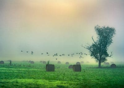 ijams nature center photo exhibit image of foggy hay field with birds in flight at sunrise