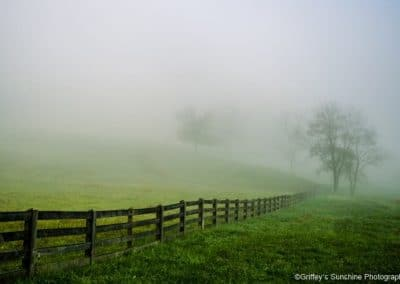 ijams nature center tree and fence in fog photo exhibit