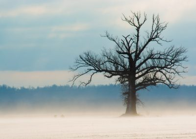 bare lone tree with blue sky and fog