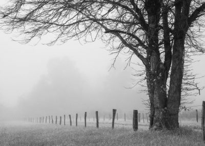 black and white photo bare tree in foggy field