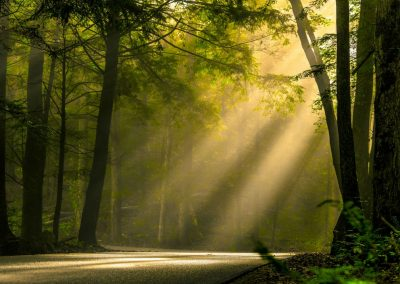 frameable art print of sunbeams filtering through trees onto forest path