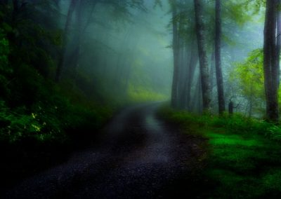 frameable photo print 2 shaded forest path dark version