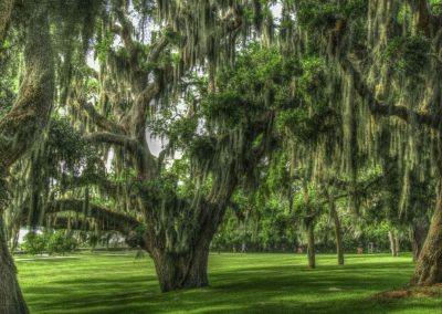 green trees with spanish moss