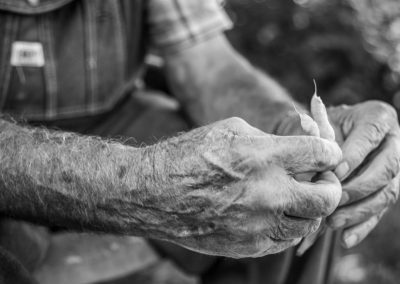 ijams nature center black and white photo of farmer's old worn hands holding green beans