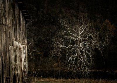 bare tree with curvy limbs at night beside old barn