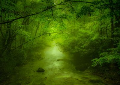 lush green forest canopy over water stream below
