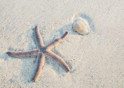 wildlife art prints 5 point starfish on sandy beach
