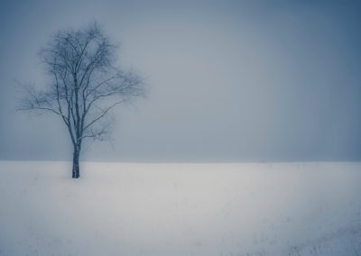 winter wall art lone tree standing in empty snow covered field