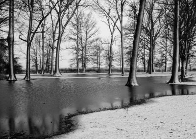 winter wall art black and white image of trees in water with snow on ground